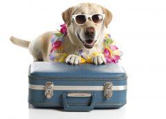 Cosas imprescindibles para viajar con mascotas…
