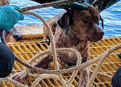Trabajadores de un pozo petrolero rescatan a un perro de las aguas del Golfo de Tailandia…