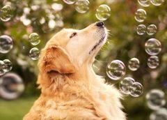 Consejos para cuidar a los perros durante la cuarentena por el coronavirus…