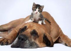 Juegos para perros y gatos que los entretenga en casa…