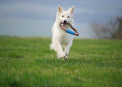 Consejos para practicar actividad física con mascotas…