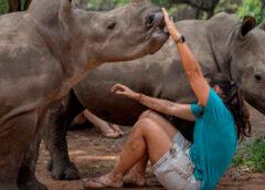 Los rinocerontes huérfanos hallan refugio en un recinto secreto de Sudáfrica…